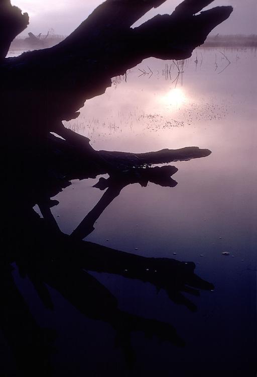 Skagit River Estuary, old tree snag, winter, Puget Sound, Washington State, South fork, Skagit River,  .