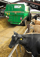 Ian Newton and Andy Shaw at Higher Farm, Byley, Byley Lane, Middlewich, Cheshire.....Jersey and Holstein cows.