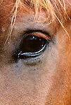 Close-up of horse's eye, Tonquin Valley, Jasper National Park, Alberta, Canada