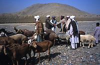 Livestock market Dealing