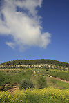 Israel, Jezreel valley. Orchards at the foothill of Mount Tabor