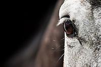 Portrait of Parting Shot at Ngong Racecourse, Nairobi, Kenya. March 13, 2013. Photo: Brendan Bannon