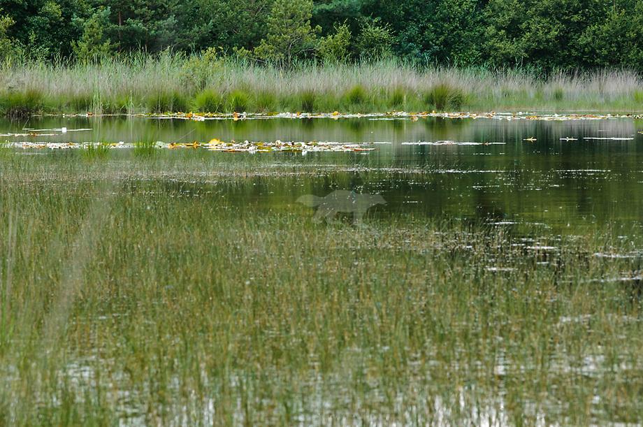 Karregat. Brabants landschap