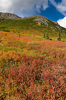 Autumn colors of red and orange dwarf birch leaves dominate the tundra of Denali National Park, interior, Alaska.