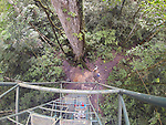 Looking Down From Canopy Tower, Tiputini