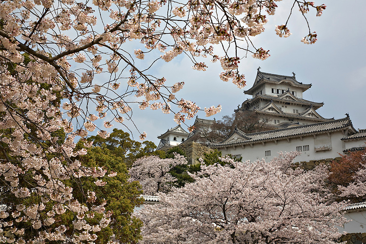 View of Himeji Castle among cherry blossoms in spring