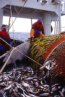 The F/V Auriga, a dragger, also known as a trawler, fishes for pollock in the Bering Sea.