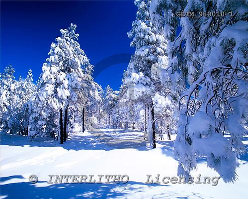 Tom Mackie, CHRISTMAS LANDSCAPE, photos, Snow-Covered Pine Trees, Flagstaff, Arizona, USA, GBTM980010-1,#XL# Landschaften, Weihnachten, paisajes, Navidad