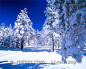 Tom Mackie, CHRISTMAS LANDSCAPE, photos, Snow-Covered Pine Trees, Flagstaff, Arizona, USA, GBTM980010-1,#XL# Landschaften, Weihnachten, paisajes, Navidad
