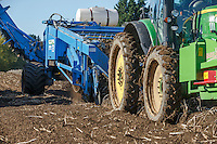 Harvesting potatoes with a Standen T3 - Lincolnshire, September
