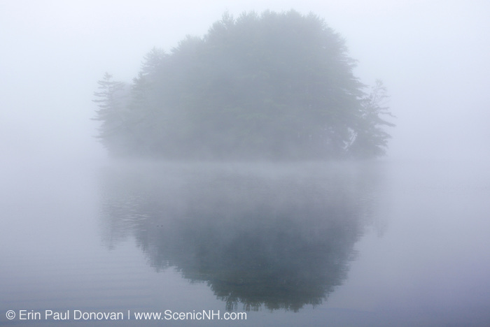 Group of trees at Moore Dam <br />
