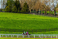 Trainers working out thoroughbred horses on the seven furlong practice track, Winstar Farm, Versailles, Kentucky USA.