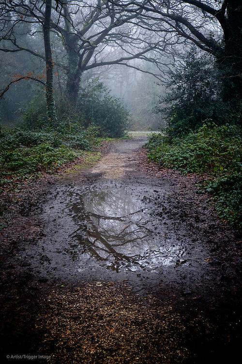 Path in parkland