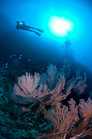Coral with sun and divers in background, The Slot dive site, Bingkudu Island, Penyu Group, Lucipara, Indonesia, Banda Sea, Pacific Ocean