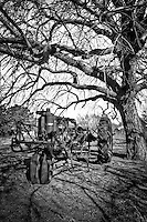 An antique tractor parked under a large tree in McLean Texas along Route 66.