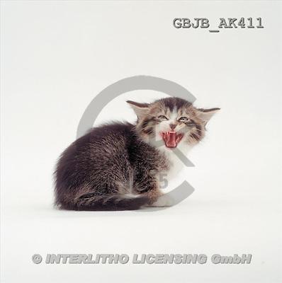 Kim, ANIMALS, fondless, photos(GBJBAK411,#A#) Tiere ohne Fond, animales sind fondo