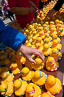 Rubber ducks are collected and distributed to ticket holders after The Ashigara River festival, Kintaro duck-race in Matsuda, Kanagawa, Japan April 25th 2010