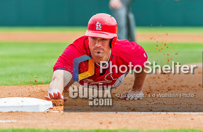 7 March 2015: St. Louis Cardinals outfielder Randal Grichuk dives safely back to first on a Spring Training pickoff attempt by the Washington Nationals at Space Coast Stadium in Viera, Florida. The Cardinals fell to the Nationals 6-5 in Grapefruit League play. Mandatory Credit: Ed Wolfstein Photo *** RAW (NEF) Image File Available ***