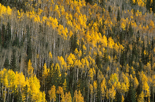 Autumn, Red Mountain Pass, near Ouray, Colorado