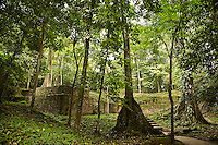 FOREST_LOCATION_90146
