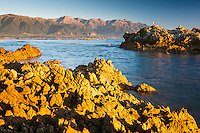 Sunrise on rocky shore of Kaikoura coastline with Seaward Kaikouras mountains in background, Kaikoura, Marlborough Region, South Island, East Coast, New Zealand