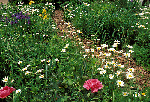 Mulched path walkway through blooming late spring garden