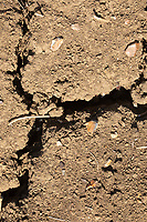 30.5.2020 Cracked soil due to drought in the Lincolnshire fens <br /> ©Tim Scrivener Photographer 07850 303986<br />      ....Covering Agriculture In The UK.