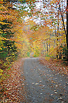 Dirt Woods Road with Colorful Fall Foliage in Walpole, New Hampshire USA