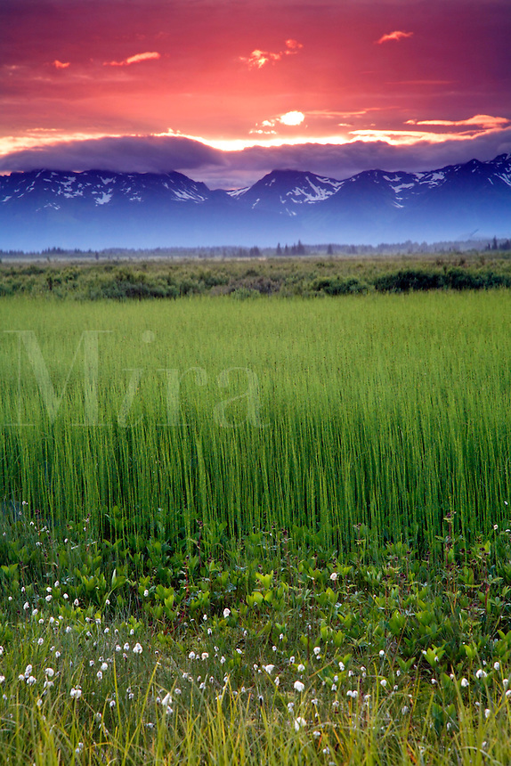 Sunset at Alaganik Slough, Copper River Delta, Cordova, Chugach National Forest, Alaska.