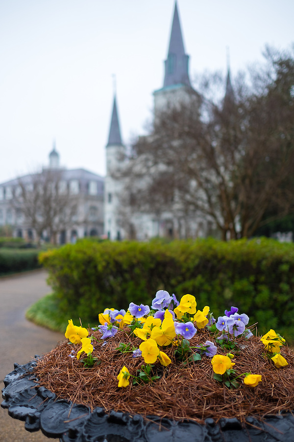 Close up of flowers in Jackson Square in New Orleans with the St. Louis Cathedral behind.