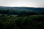 Vendange 2009 Beaujolais, France