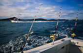 Big game fishing boats heading out of the Bay of Islands towards Cape Brett. Northland, New Zealand.