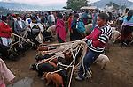 Amérique du Sud. Equateur. Trekking sur les volcans d'Equateur. indiens au marché d'Otavalo dans la région d'Ibarra au nord du pays vendeuse de cochons d'inde (on les magne).South America. Ecuador. Trekking on the volcanoes