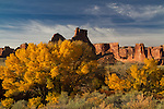Courtwash Wash and Cottonwood in fall color, Arches National Park, Utah.