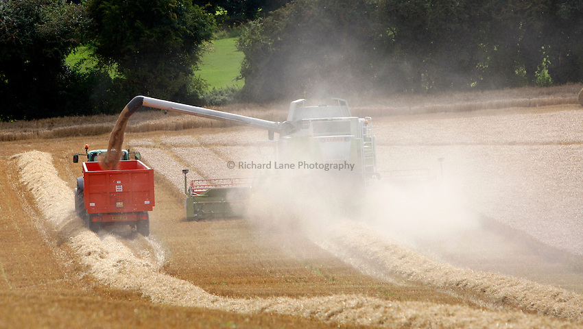 Photo: Richard Lane/Richard Lane Photography. Grain harvest near Amersham, Buckinghamshire. 17/08/2008. A Class combine harvester cutting spring barley on a hill unloads into a trailer.