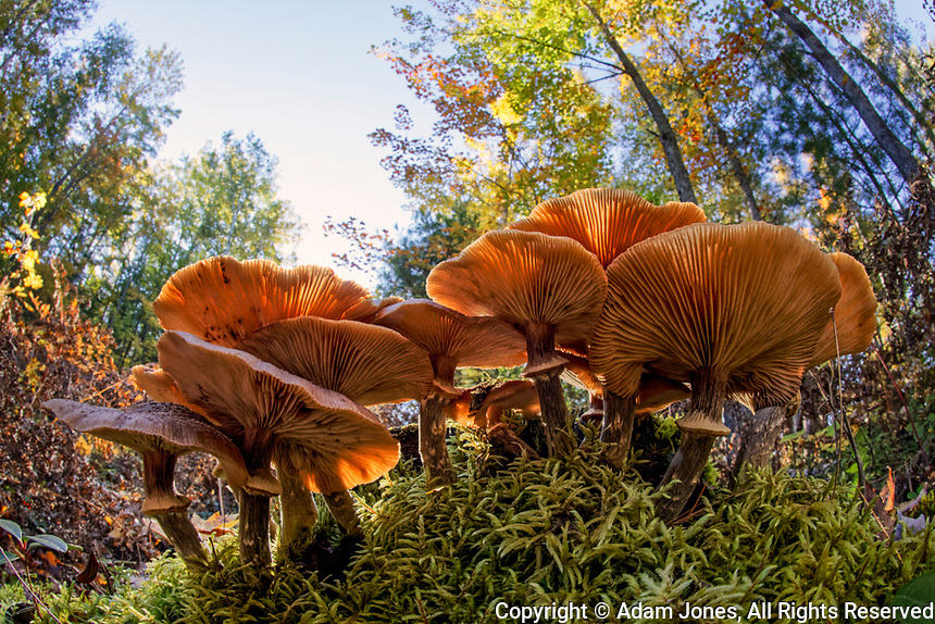 Low wide angle view of mushrooms on forest floor, Upper Peninsula of Michigan, Hiawatha National Forest, Michigan.