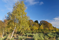 Autumn colours on Hampshire heathland