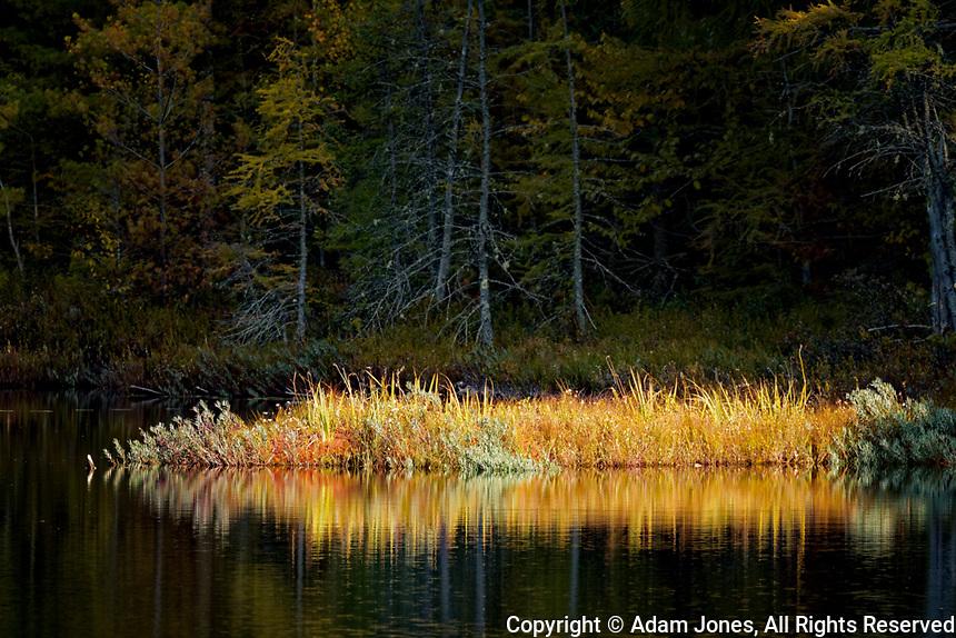 Sunlight on grass along shoreline of  Red Jack Lake at sunrise, Hiawatha National Forest, Upper Peninsula of Michigan.