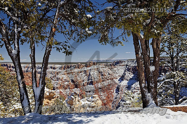 Tom Mackie, CHRISTMAS LANDSCAPE, photos,+America, American, Arizona, Grand Canyon National Park, North America, US, USA, United States, United States of America, gran+d view, holiday destination, horizontal, horizontals, icon, iconic, landmark, landmarks, national park, natural wonder of the+world, snow, snow-covered, weather, winter, wonder,America, American, Arizona, Grand Canyon National Park, North America, US+, USA, United States, United States of America, grand view, holiday destination, horizontal, horizontals, icon, iconic, landm+,GBTM120101-1,#xl#