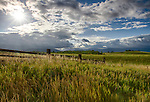 Idaho, Eastern, Driggs, Rolling green fields and fence of the Teton Valley in summer.