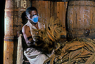 Cuba, March 1992: A worker airing the tobacco leaves in the Partagas factory in Havana. This operation produces a lot of fine dust, which requires the worker to wear a mask.