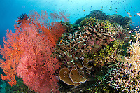 corals at the japanese wreck in Amed - Bali.<br />