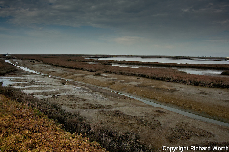 Low tide at the Hayward Regional Shoreline reveals the mud and grasses vital to some bird's extistence