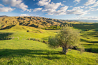 Cluden Hilll, late afternoon, Central Otago, New Zealand - stock photo, canvas, fine art print