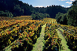 Vineyards in Dry Creek Valley, Sonoma County, California