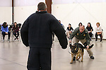 Volunteer Bruce Huff, Carson City Sheriff's Deputy Joe Apple and his K-9 partner Hero demonstrate patrol skills for a group of GATE students from Carson Middle and Eagle Valley Middle schools, on Wednesday, March 5, 2014 at Fuji Park.<br /> Photo by Cathleen Allison/Nevada Photo Source