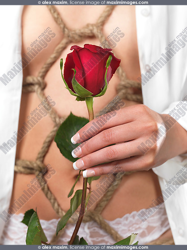 Woman with artistic rope pattern of Japanese bondage Shibari under her shirt holding a red rose in her hand