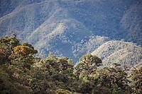 Cloud Forest on ridge; Ecuador, Prov. Zamora-Chinchipe, Tapichalaca Reseve