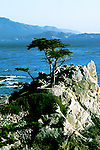 California: Monterey area.  Lone Cypress at Pebble Beach.  Photo #: camon2104..Photo copyright Lee Foster, 510/549-2202, lee@fostertravel.com, www.fostertravel.com
