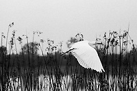 Egret in Flight, Film